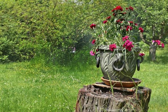 Pařez můžete nějaký čas použít také na ozdobu zahrady. Může sloužit například jako efektní podstavec na hrnkové květiny