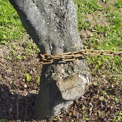 Hupcuk je nutno ukotvit tak, aby nedošlo kvyvrácení nesprávného stromu