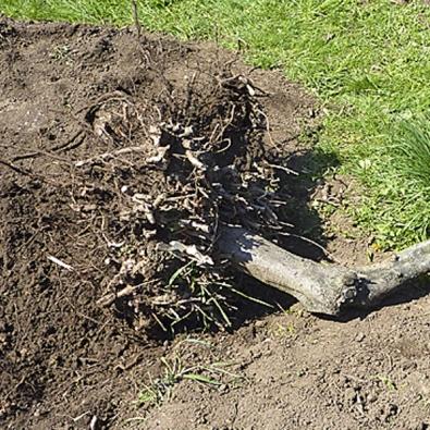 Po hodině působení hupcuku stačilo zapáčit apahýl se poslušně skácel kzemi