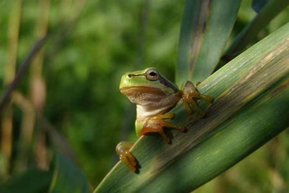 Vodní plochy přílákají do zahrady drobné živočichy - například žáby - kteří se také mohou stát ozdobou zahrady