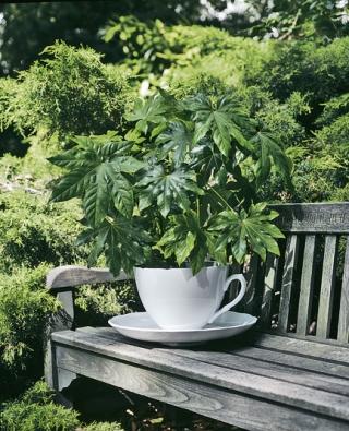 Díky poctivým rozměrům (v. 27 cm, š. 47 cm) je obří šálek na květiny stabilní a pojme dostatek zeminy i na vzrostlejší rostlinu (THORSTEN VAN ELTEN)