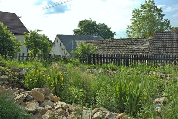 Malá kořenová čistička na Šumavě se pro majitele stala nejživějším koutem zahrady aje často doslova obsypána motýly