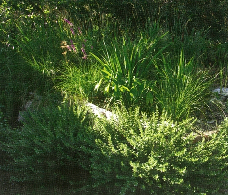 Kořenová čistička může být pro zahradu přínosná i esteticky.