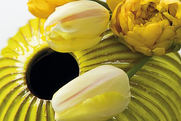 Domu pán - tulipán