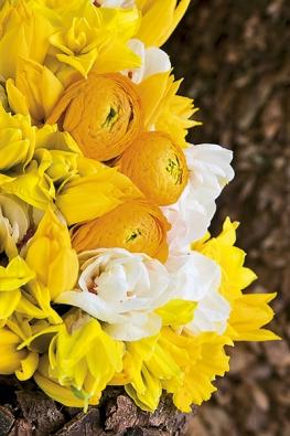 Prostor prosluní tulipány spryskyřníky anarcisy dvou barev (Tulipa, Narcissus, Ranunculus).