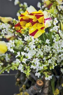 Tím, jak tulipány rostou, nabízí živé proměnlivé aranžmá každým dnem jiný obrázek  (Tulipa, Prunus).