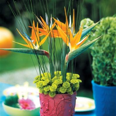"""Vůni exotiky navodí výrazné aneobvyklé strelície soranžovomodrými květy. Do talíře vám tak budou sympaticky hledět """"ptáci"""" sdlouhým zeleným zobákem avýrazným vztyčeným chocholem oranžových amodrých pírek. Doplní je drobnokvěté zelenožluté chryzantémy."""
