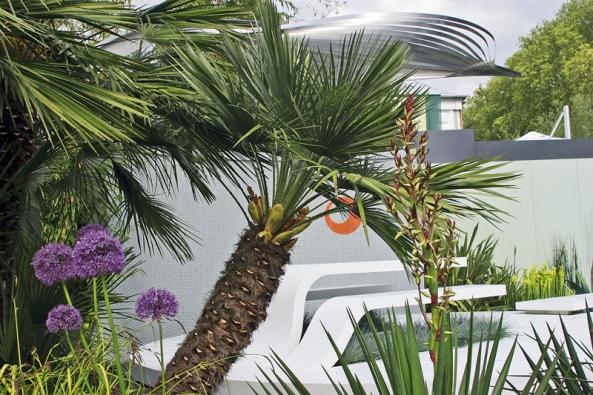 Celou zahradu zdobí nádherné palmy.