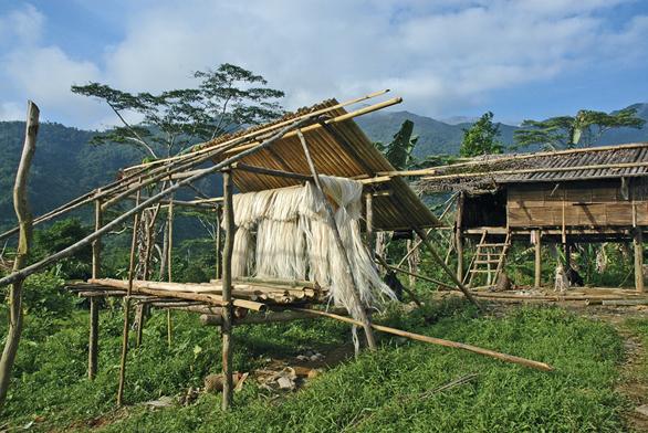 Vlákna (abaka) ztextilního banánovníku se suší ve filipínské vesnici.
