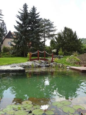 Začlenění nového koupacího jezírka do staré zahrady výrazně zvyšuje rekreační iestetickou hodnotu pozemku.
