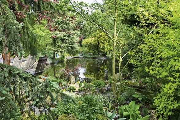 Vjezeře, které má 80 m² vodní plochy, se uprostřed zrcadlí smrk východní (Picea orientalis ´Aureospica´). Vpopředí zakrslé hosty.