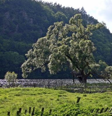Vrba bílá (Salix alba), je stromem v zahradách neprávem opomíjeným. Rozhodnete-li se pro ni, odvděčí se vám romantickým vzhledem. Vhodná do zahrad v blízkosti vody.
