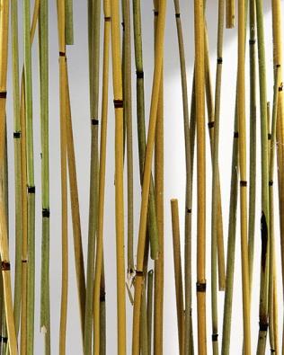 Natur Art motiv dveřních křídel – ART výplň bambus zelený (SAPELI)