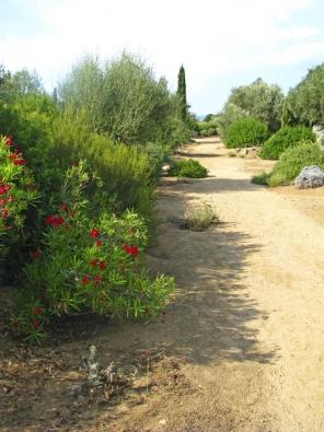 Mezi středomořskou vegetací vynikají rozkvetlé oleandry.