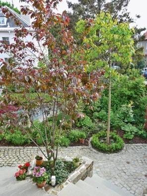 Nově založená zahrada ztéhož místa. Do truhlíku mezi schodišti se vešla keřovitá červenolistá sakura.