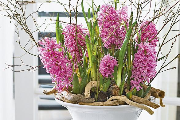 Růžové hyacinty vkombinaci světvičkami působí jako zátiší vytvořené samotnou přírodou.