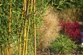 Bambusy pro domácí pěstitele