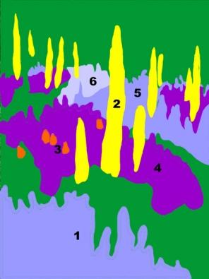 1l Šanta kočičí (Nepeta x faassenii) 2l Liliochvostec úzkolistý (Eremurus stenophyllus) 3l Kleopatřina jehla (Kniphophia uvaria) 4l Šalvěj hajní  (Salvia nemorosa ´Viola Klose´)  5l Šanta kočičí  (Nepeta x faassenii ´Six Hills Giant´)   6l Pelyněk  (Artemisia ludoviciana ´Silver Queen´).