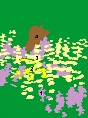 1l Dračík  (Penstemon digitalis ´Husker Red´) 2l Krásnoočko přeslenité  (Coreopsis verticillata ´Grandiflora´)  3l sápa Russelova (Phlomis russeliana)  4l Třtina ostrokvětá (Calamagrostis x acutiflora ´Karl Foerster´).
