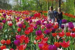 Pestrobarevná přehlídka květů