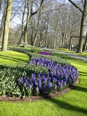 Každé jaro zaplavují Keukenhof tisíce květů jarních cibulovin.