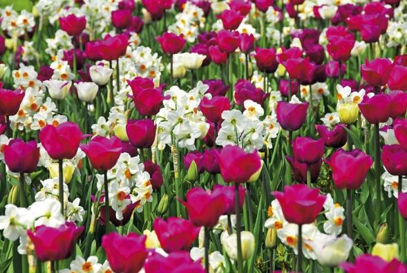 Vněkterých částech parku se návštěvníci doslova topí vzáplavě tulipánů.