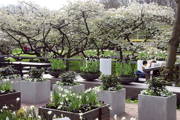 Zajímavé je ivyužití kontrastních barev – černé tulipány vpopředí bíle kvetoucích stromů.