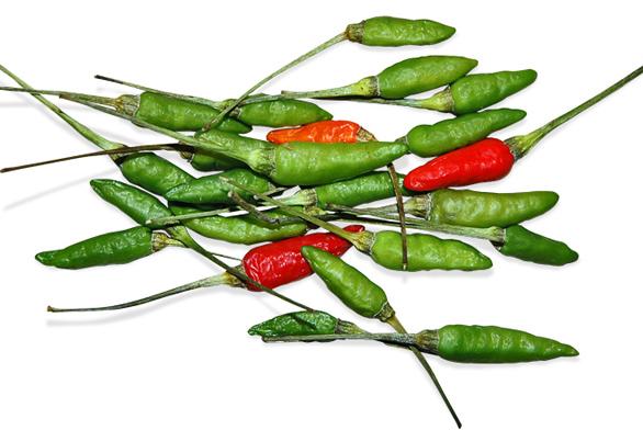 Drobné plody papriky křovité (Capsicum frutescens) odrůdy 'Bird´s Eye' jsou velmi palčivým chilli kořením.