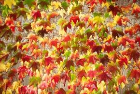Živé ploty protkané květy