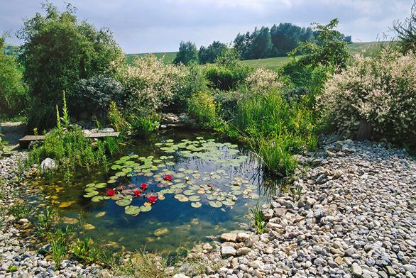 Zahradní jezírko slekníny astulíky, vpozadí jsouvrby. Základ jezírka tvoří pevná fólie podložená geotextilií, břehy jsou vytvořeny vrstvou kamenů.