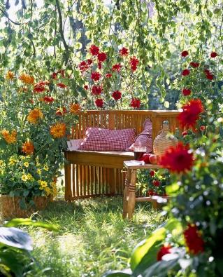 Často stačí pár minut vzeleni, abyste načerpali energii. Lehátko nebo zahradní lavice pod astrami je to pravé místo.