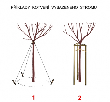 Řešení (vlevo) pomocí lan se dnes již moc nepoužívá, ale vněkterých případech se může hodit, zvláště když se dopodloží nedá kůl dostatečně zatlouci nebo ho nemáme kdispozici. Řešení vpravo ajeho četné variace jsou dnes velmi rozšířené, protože zároveň dobře chrání mladý kmen proti mechanickému poškození (například při sečení) avandalství. Navíc nezabírá mnoho místa kolem stromu.