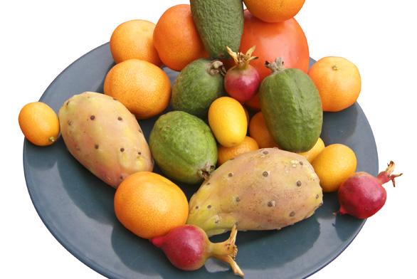 Pěstování exotického ovoce