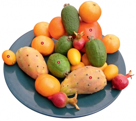 1) granátovník, lidově granátové jablko (Punica granatum), 2) nopál fíkovníkový, lidově indiánský fík (Opuntia ficus-indica), 3) fejchoa neboli aka Sellowova (Acca sellowiana), 4)nagami kumkvat (Fortunella margarita), 5) kalamondin (Citrus mitis), 6) rajčenka (Cyphomandra betacea).