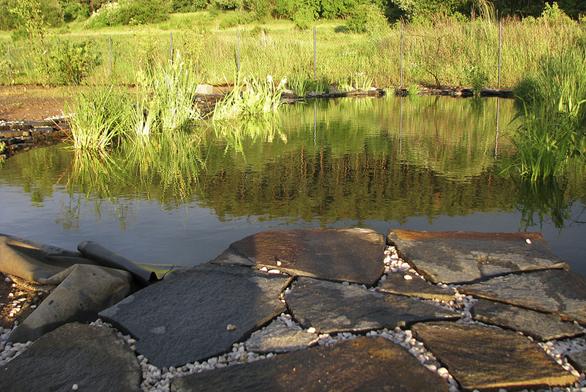 Vodu zabydlely puškvorec obecný, ďáblík bahenní, kosatec žlutý, orobinec a skřípinec jezerní.