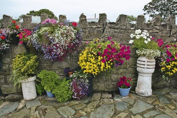 Květiny zútulní apříjemně zabydlí každý prostor.