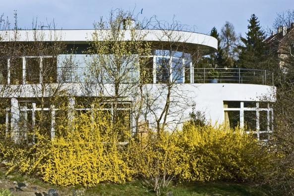 Na jaře vás vyláká na terasu rozkvetlá zlatice (Forsythia). Stačí jeden keř vblízkosti domu nebo vstupu.