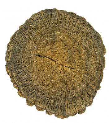 Zdařilá betonová imitace dřeva skýtá mnoho možností pro ozvláštnění zahrady (VIKO).