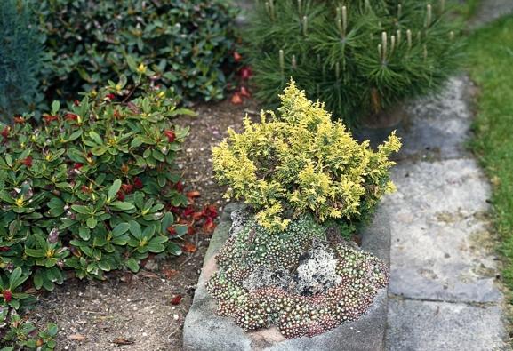 Rozpálený roh může zkrášlit kámen snetřeskem nebo rozchodníkem.