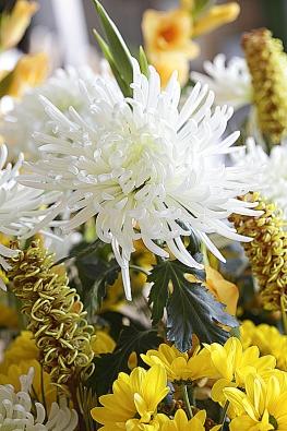 Bílé ažluté chryzantémy doplňují lososové mečíky agrevilea. Stonky podpírají kusy kůry.