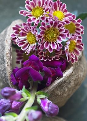 Dvoubarevné květy chryzantém ladí se sametovými květy hledíku.