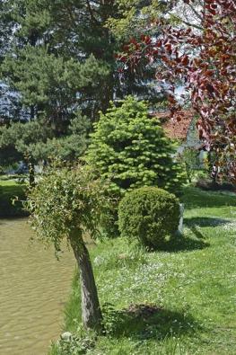 Na zahradě tvoří příjemnou symbiózu listnaté stromy sjehličnany.