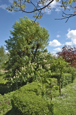 Sestříhané živé ploty formují hlavně okraje zahrady.