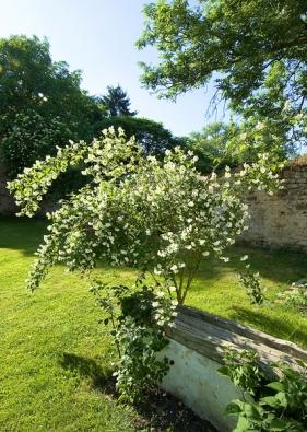 Když kvete jasmín, vysazený před osmi lety, provoní celou zahradu.
