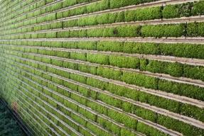 Vegetační fasády mají zelenou