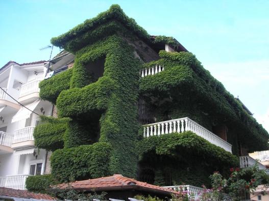 Dům se svěže zelenou přírodní izolací. Nechali byste si něco podobného vyrůst také na svém domě?