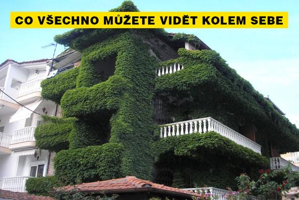 FOTO DNE: Zelená izolace na domě