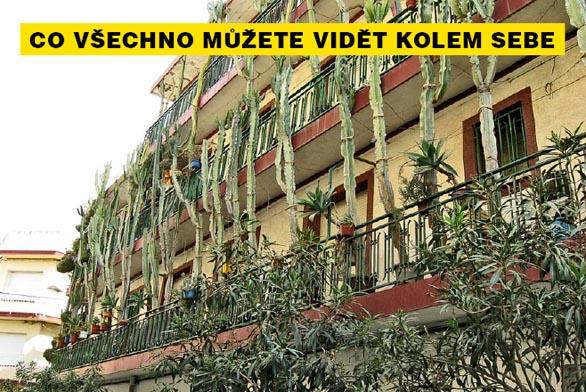 Dům ve městě Callela u Barcelony, jehož obyvatelé milují kaktusy...