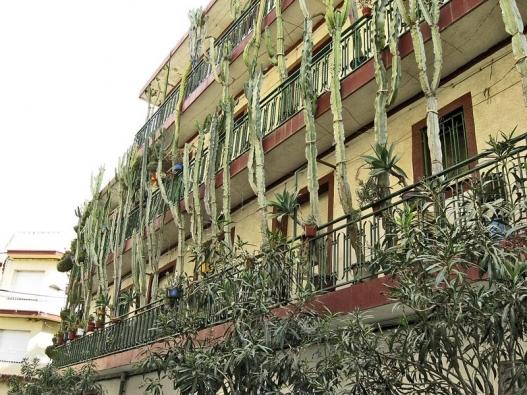 Dům ve městě Callela u Barcelony, jehož obyvatelé milují kaktusy.