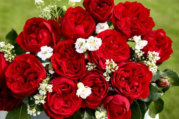 Záhonová růže Out of Rosenheim nechá vyniknout svým nostalgickým plným květům ivevazbě.